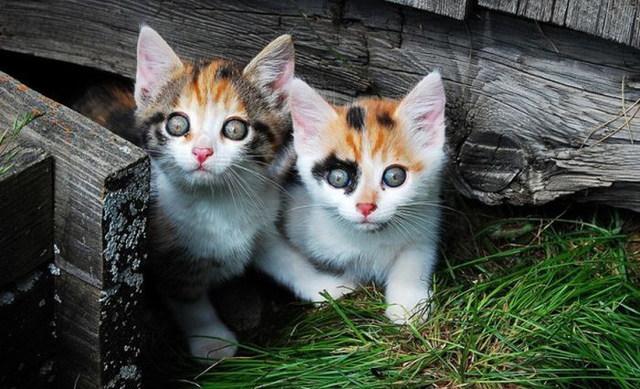 Images de chats trop mignons - Un chat gratuit ...