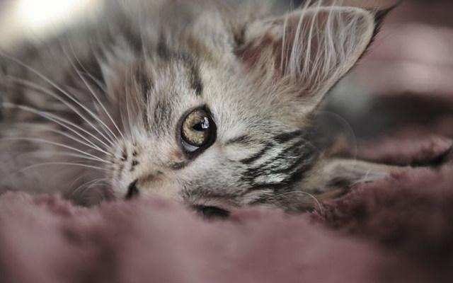 grey kitten wallpaper 294 - photo #39