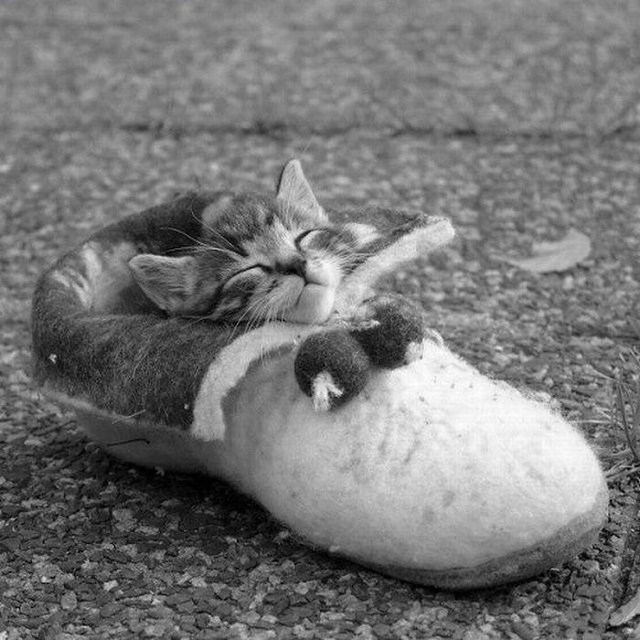Images de chats trop mignons - Image de chaton trop mimi ...